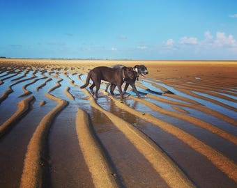 Tide is out, or Adventures of two tireless sisters.  Mackay, Queensland