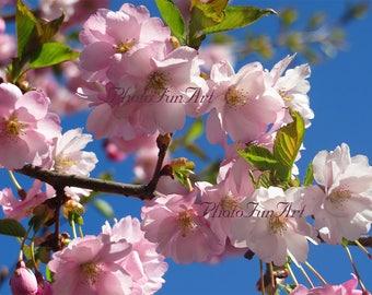 mothers day gift sakura cherry photography printble wall art decor gift for mother sakura cherry pink flowers print cherry wallpaper