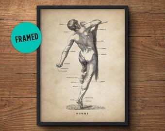 Human anatomy print, Framed art, Medical student gift, Anatomy poster gift, Anatomy art decor, Human anatomy poster, Anatomy decor