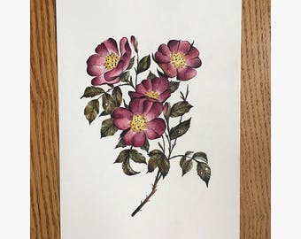 Wild Roses Botanical Illustration Print