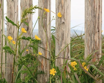 Viking Wildflowers