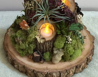 Rustic moss and wood Centerpiece