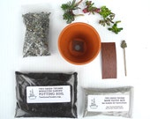 Reserved for Katelyn - Miniature Meditation Garden DIY Kit, With Tiny Buddha, Succulent Cuttings, Valentines Day Gift