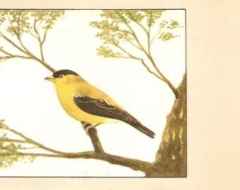 American Goldfinch Postcard, Bird vintage postcard