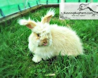 1 Ounce Cruelty Free Rabbit Wool Spinning Fibers Natural Raw Chocolate Tort English Angora Rabbit Fur Hair Pure Spinning Wool from Bunji