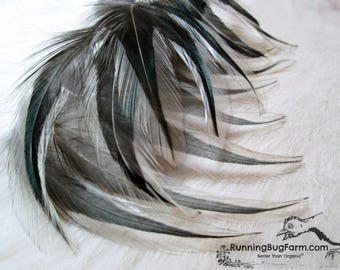 """Black Hackle Feathers Black White Real Bird Feathers Natural Organic Silver Laced Cochin Rooster Feathers For Crafts 20 @ 4"""" - 4.5"""" / SLC9"""