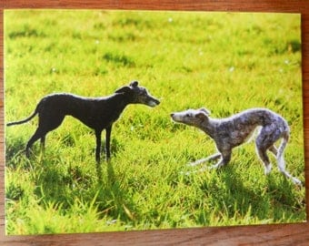Greyhounds At Play Greetings Card