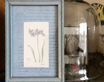 Original Mini Botanical Indian Hyacinth | Vintage Frame | 5x7 | Gift