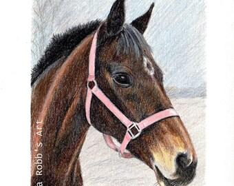 Custom Pet Portrait Colored Pencil 5x7