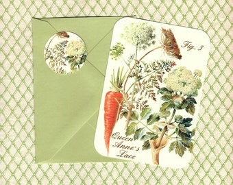 Note Cards, Set of 4, Botanicals, Queen Anne's Lace, Note Cards, Flower Cards, Stickers