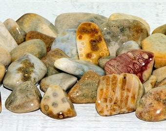 Agatized Coral Tumbled Gemstone - Stone to Strengthen Weakness