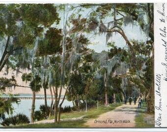 North Walk Road Scene Ormond Florida 1907 postcard