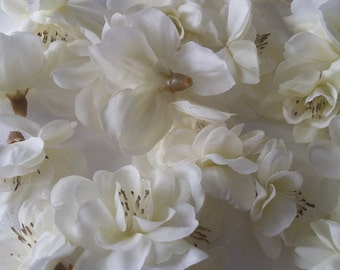 SALE Lot of 25 cream Delphiniums assorted sizes