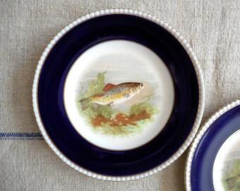 Vintage Dinner Fish Plate  Cobalt Rim Fondeville Ambassador Ware