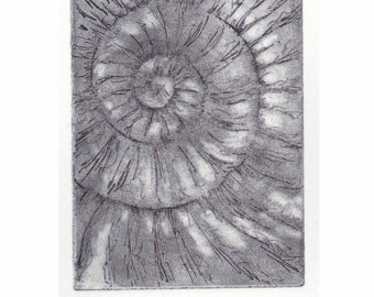 Original ammonite fossil zinc etching no.20 jurassic Dorset coast fossil spiral fossil ammonites golden section
