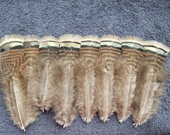 Natural Striped Bronze Turkey Plumage Feathers - Lot of 12