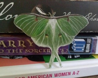 Hand drawn Luna Moth scientific illustration pin