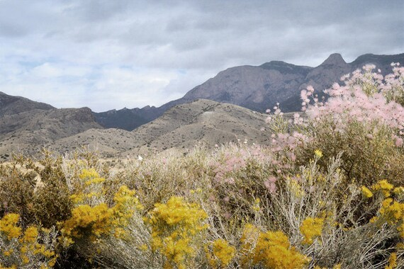 Mountain Photography Print Fine Art New Mexico Sandia Mountains Wildflowers Desert Southwest Autumn Landscape Photography Print.