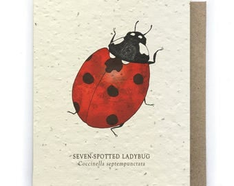 Ladybug Greeting Card - Plantable Seed Paper - Blank Inside