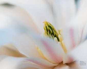 Magnolia flower, Nature photography, Magnolia print, Botanical art, White floral print, Magnolia close up, Pink and pearl, Macro photography