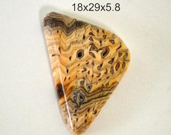 hells canyon petrified wood cabochon.  18x29x5.8 freeform cabochon