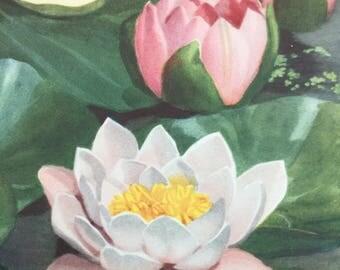 Vintage Floral Print - Amateur Gardening Supplement - 1930's Floral Picture - Botanical Print - Vintage Garden - Vintage Florals