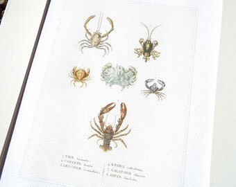 Crab Lobster Sea Life Coastal Naturalist Collection 1 Archival Print on Watercolor Paper