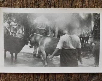 Original Vintage Photograph Donkey & Goat