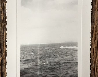 Original Vintage Photograph Dream Sea