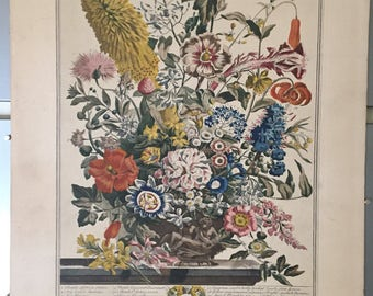 "antique floral engraving ""August"" from The Twelve Months Of Flowers, Henry Fletcher after Pieter Casteels"