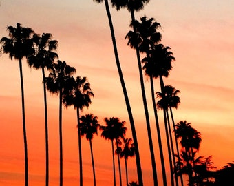 Palm Trees and Sunset Photography in LA, California.  Los Angeles Palm Tree Photography. Hollywood. California Photography, LA Photo. LA Art