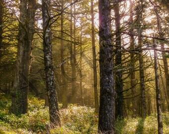 Framed - Sun in Forest