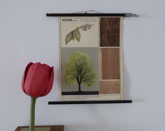 Original Vintage Elm Tree Vintage Botanical Chart - Small Plant School Chart - Vintage School Chart c. 1960
