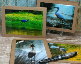 Bland Note Cards Featuring Original Photographs of Birds of the Low-Country on 5x7 Brown Kraft Card Stock Set of 4