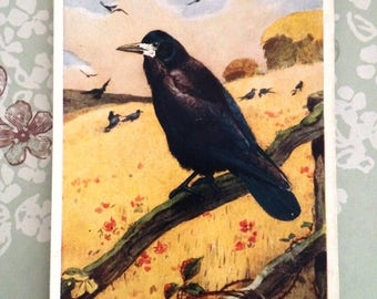 "Winifred Austen ""The Rook"" Bird Vintage Postcard."