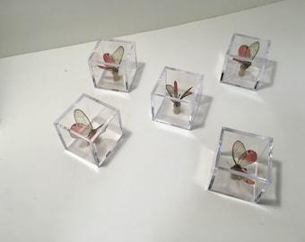 Glasswing Butterfly in plastic display case