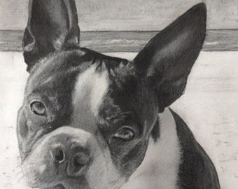 Custom Pet Portrait Drawing, Custom Charcoal Pet Portrait, Portrait from Photo