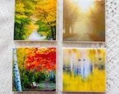 Autumn Splendor Photo Coa...