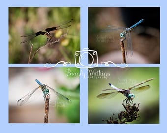 Dragonfly photography prints, 4x6 photograph post cards, insect prints, nature photography, postcard set, dragonfly photo set,wall art decor