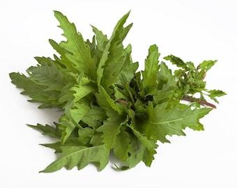 H) EPAZOTE~Seeds!!!~~~~Chenopodium ambrosioides~~Aztec Herb!!