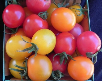 VTC) VERY CHERRY Cherry Tomato~Seeds!!!!!!~~~~~~Newer Variety!!!