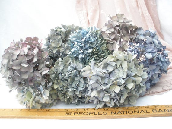 Dried hydrangea flowers purple lavender blue shabby chic for Dried flowers craft supplies