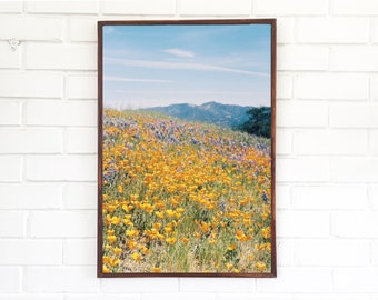 Flower Fields Print / Northern California Photography / Spring Flowers Landscape Photo Wildflowers Mountain Floral Orange Poppies Art Poppy