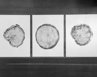 Utah Trees, Triptych art set, Real tree ring art, set of 3 prints, cabin wall art, cottage wall art, forest art, Geometric art print, Linton