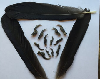Twelve English Crow Claws or Talons with Feathers