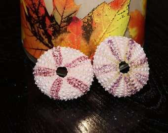 6 Pink Sea Urchin Ornament, Glitter Ornaments, Sea Urchin Craft, Urchin Ornaments, Christmas Ornaments, Shell Ornaments