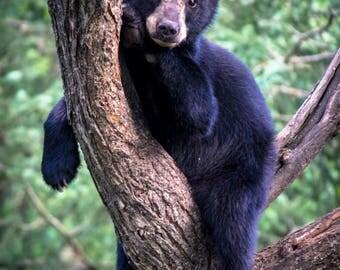 Hangin' Bear