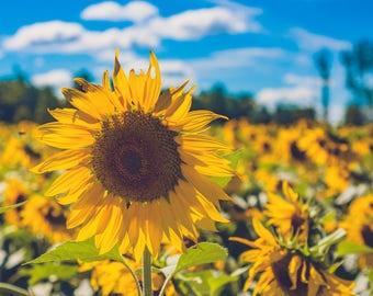 Framed Canvas wall art photograph - sunflower - sunflower patch - art for your home -sunflower wall art - canvas art sunflowers - sky - sun