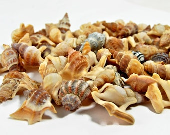 500 Sea Shells, Shells For Crafts, Craft shells, SeaShells, Beach Wedding, Scrapbooking, Jewelry, Crafting Shells, Tiny Shells, Shells
