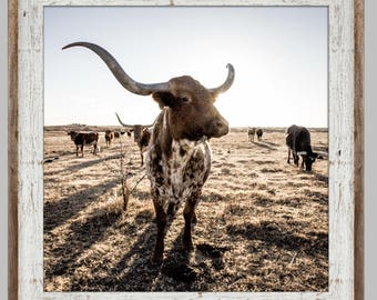 Longhorn Cattle framed or unframed Print or canvas - Ranch photo, barnwood, wall decor, cattle, wall art, western art - Free Shipping